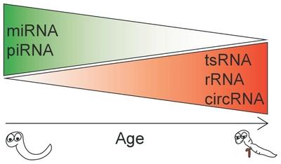 Figure F2